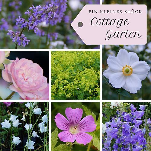 Ein Kleines Stück Cottage Garten Paket Mit 14 Winterharten Stauden