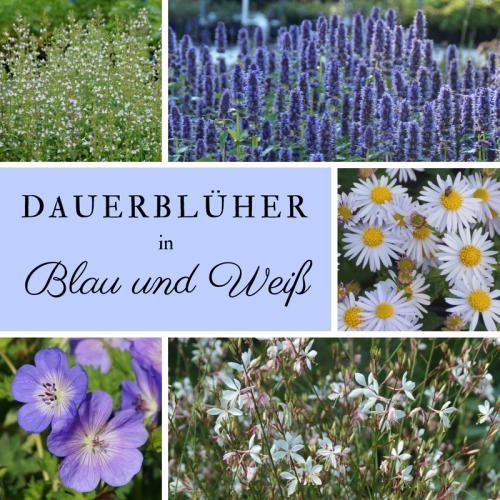 Dauerbluher In Blau Und Weiss Paket Mit 10 Winterharten Stauden